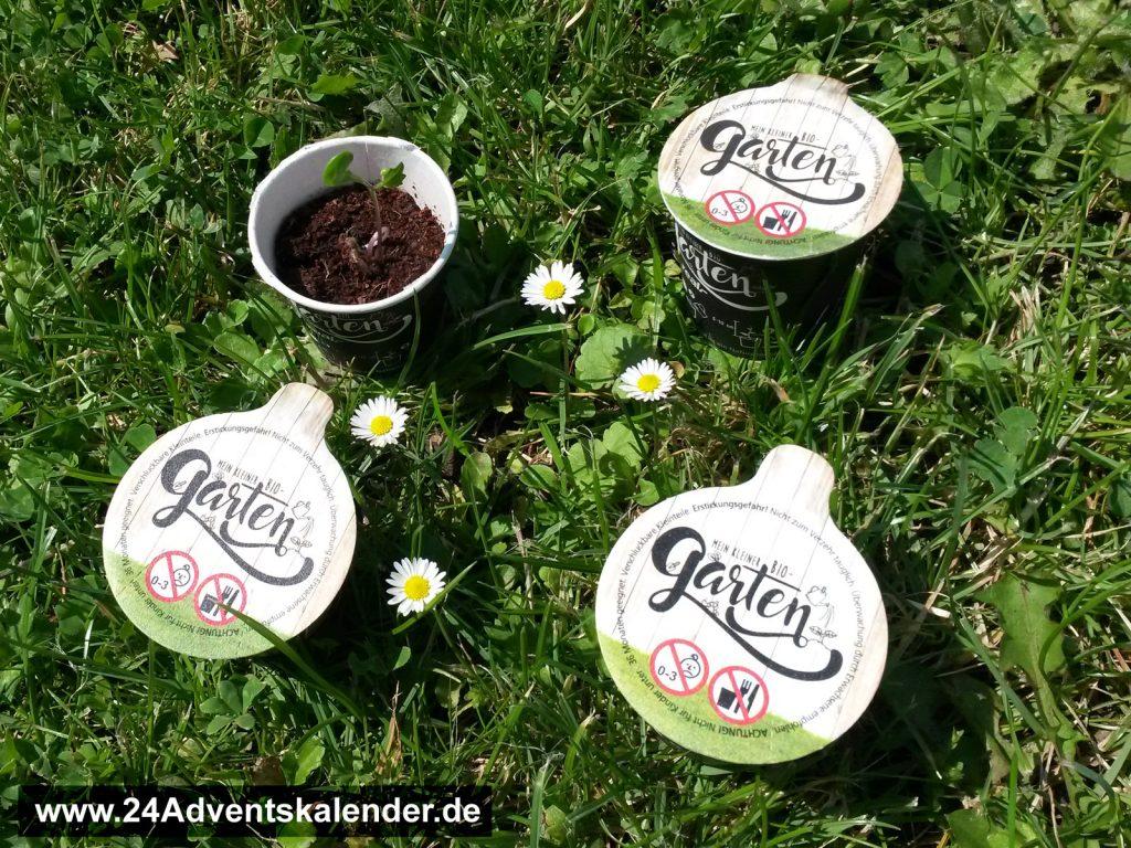 4 Saatgut-Töpfchen auf sommerlicher Wiese.