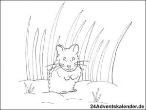 """Vorschau der Malvorlage """"Hamster im Acker"""" zum ausmalen"""