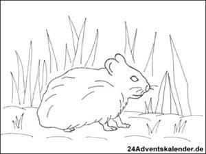 """Vorschau der Malvorlage """"Hamster im Feld"""" zum ausmalen"""